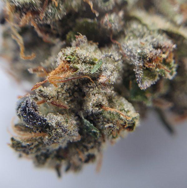 MK Ultra Flower Closeup