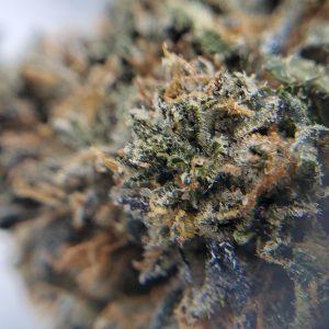 Buy Jungle Cake Flower EZ Weed Online