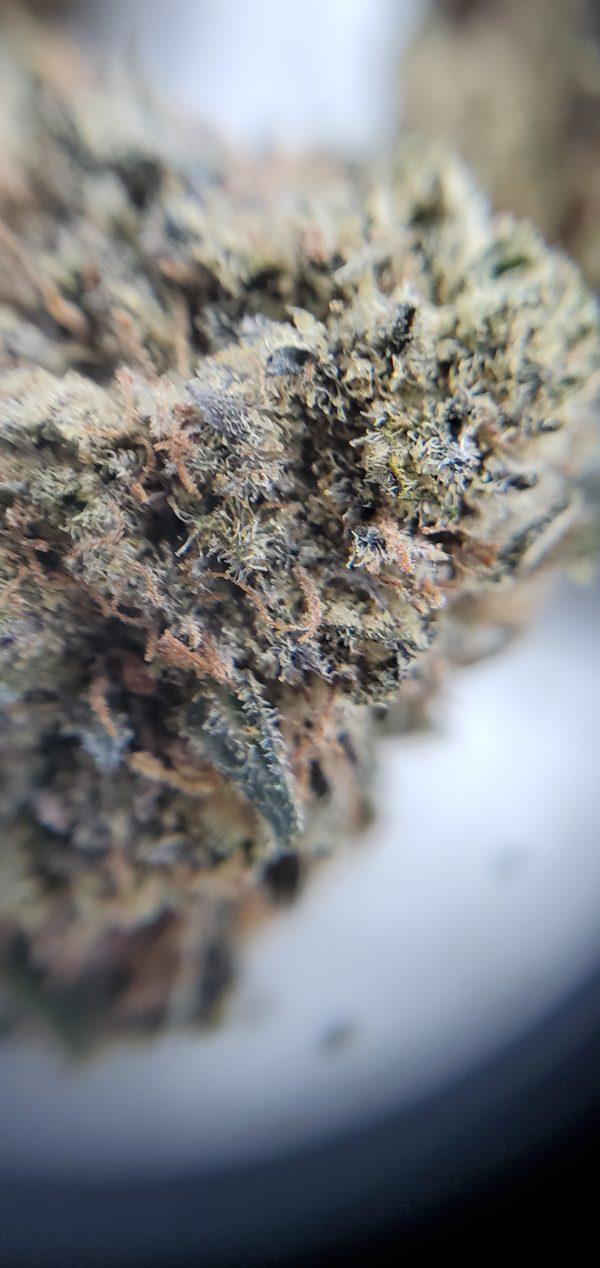 purple cookies flower close up ezweed online