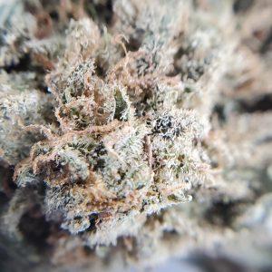 White Widow Flower Close Up EZ Weed Online