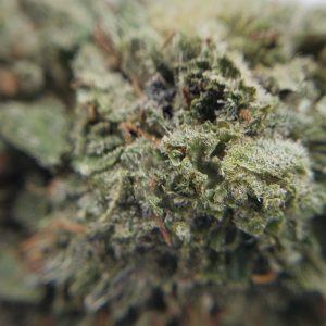 Buy Green Crack EZ Weed Online Closeup