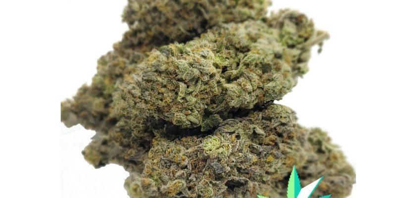 Buy Exotic Weed Online: Essential Tips
