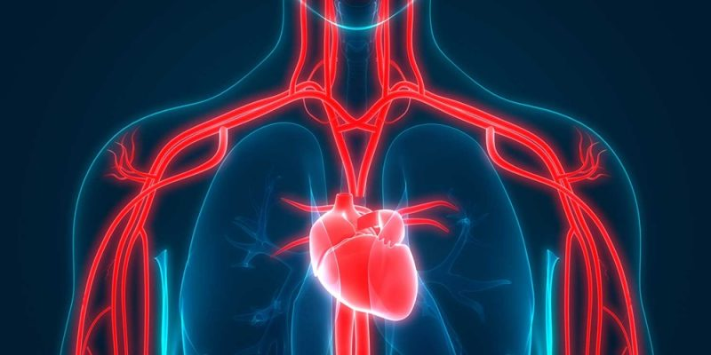 Cannabis and Heart Health: Is There A Relationship?